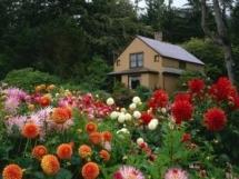 красивые цветники у дома