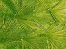 оргинальный узор на зеленой текстурной краске