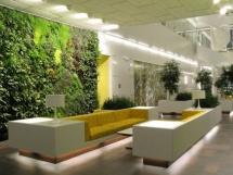 озеленение офиса, фотографии