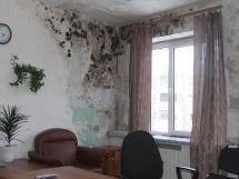 средство от плесени и обработка стен и потолка