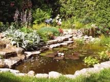 очистка и растения для пруда на даче
