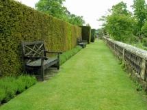 растения и кустарники для живой изгороди
